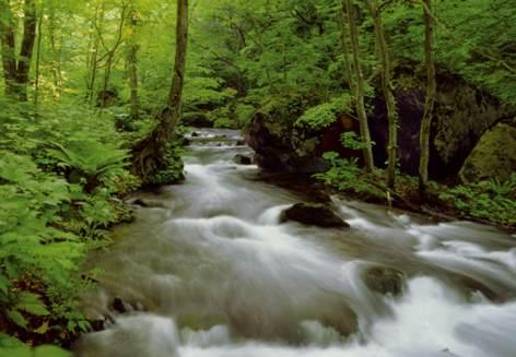 Φωτοταπετσαρία με θέμα ποτάμι στο